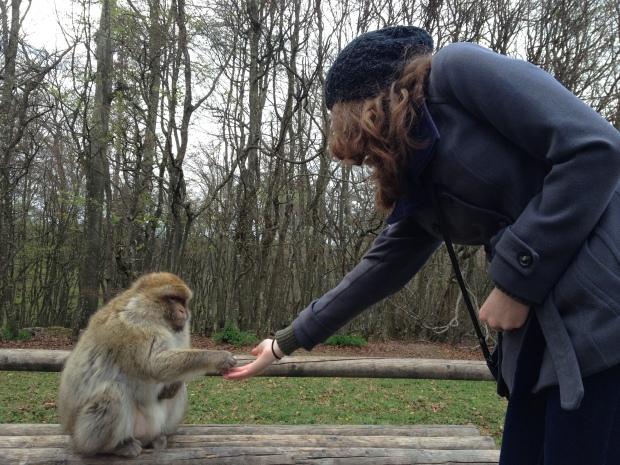 Feeding Salem Monkey